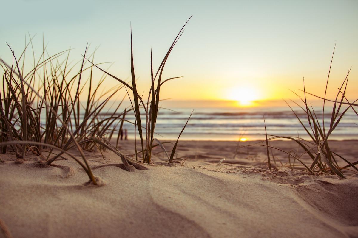 sand grass beach sunset